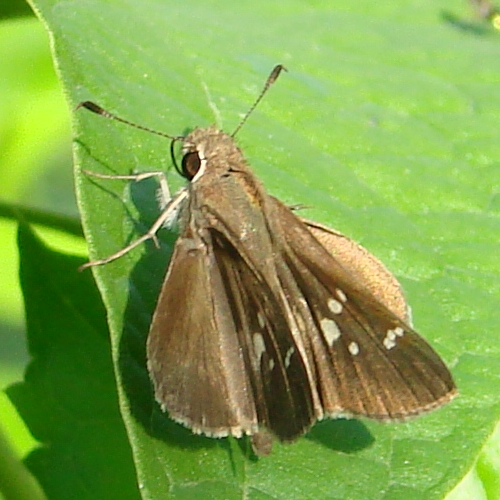 Click to zoom out